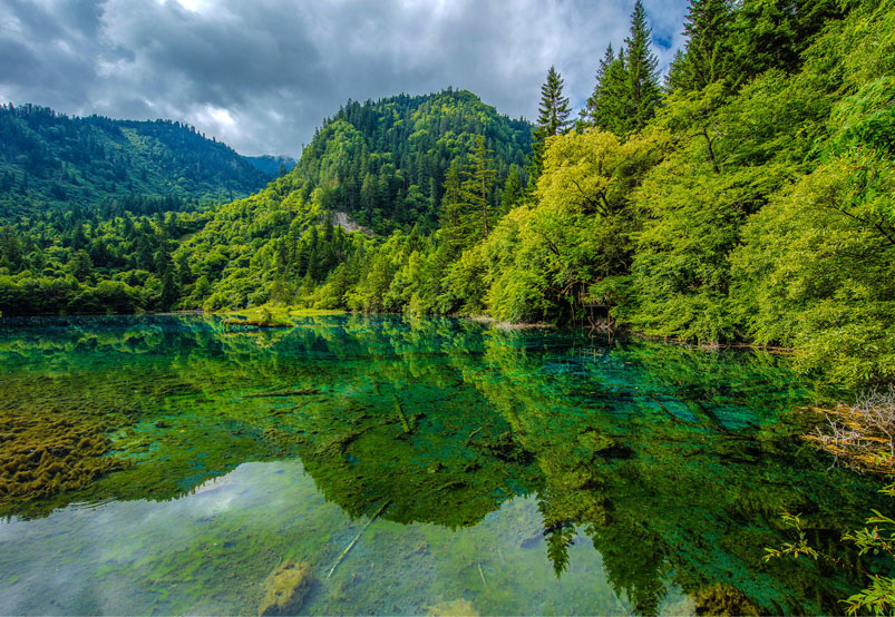 Lush Forests of Jiuzhaigou Valley in summer