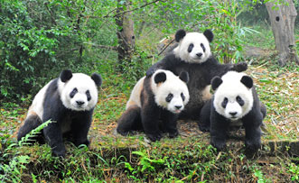 1 Day Chengdu Sightseeing Tour ( A )