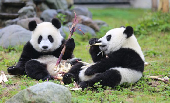 10 Days Classic China Tour Package with Panda Exploration