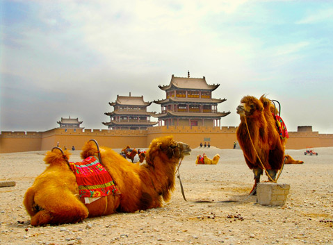 The Camels outside of Jiayuguan Pass