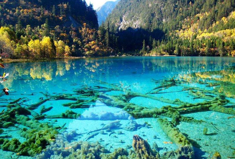 The Rotten Wood in the Water of Jiuzhai Valley