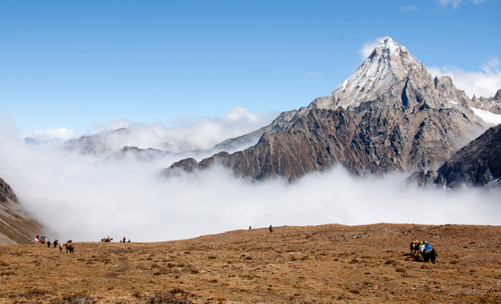 8 Days Mount Gongga, Conch Gully & Xinduqiao Tour