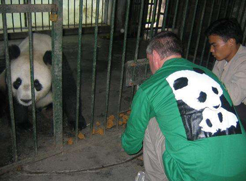 Feed panda with staff