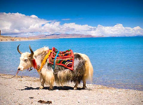 Namtso Lake Tibet – Introduction, Facts and Travel Tips
