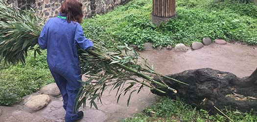 Dujiangyan panda base, located in Mount Qingcheng town, Dujiangyan city, is the first research base where the wild giant panda is the only rescue object of study in china.