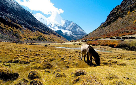 How to Travel from Daocheng County to Yading Scenic Area